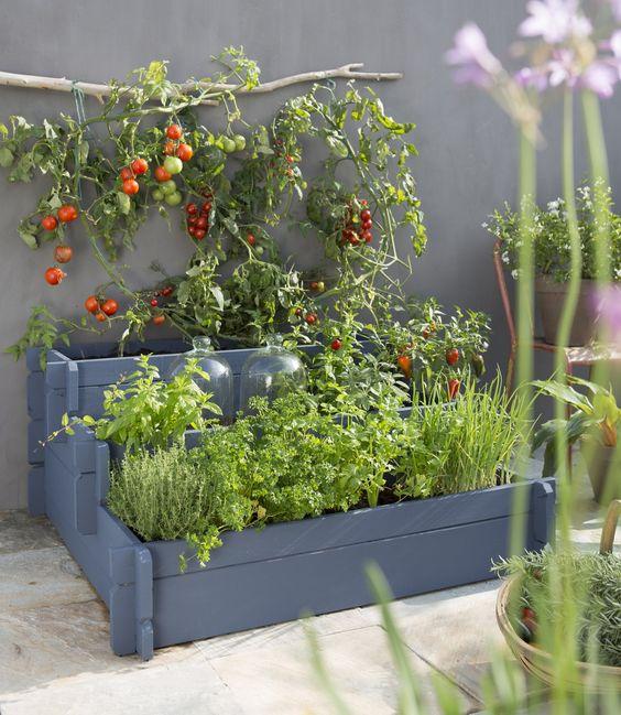 faire pousser légumes sans jardin