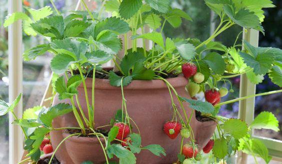 faire pousser légumes en pots